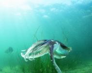 【こととばギャラリー】海の案内人が見た海の中 〜長崎県大村湾の海中写真展〜