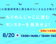 【8/20(月)】元水族館飼育員と探る海のちいさな生き物たち・・ちりめんじゃこに潜むモンスターを発見せよ!
